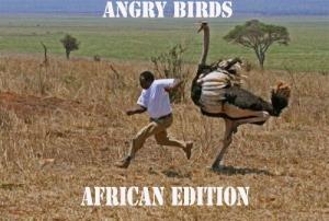ANGRY BIRD copy
